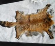 Fox Skin